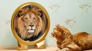 omag-lion-949x534